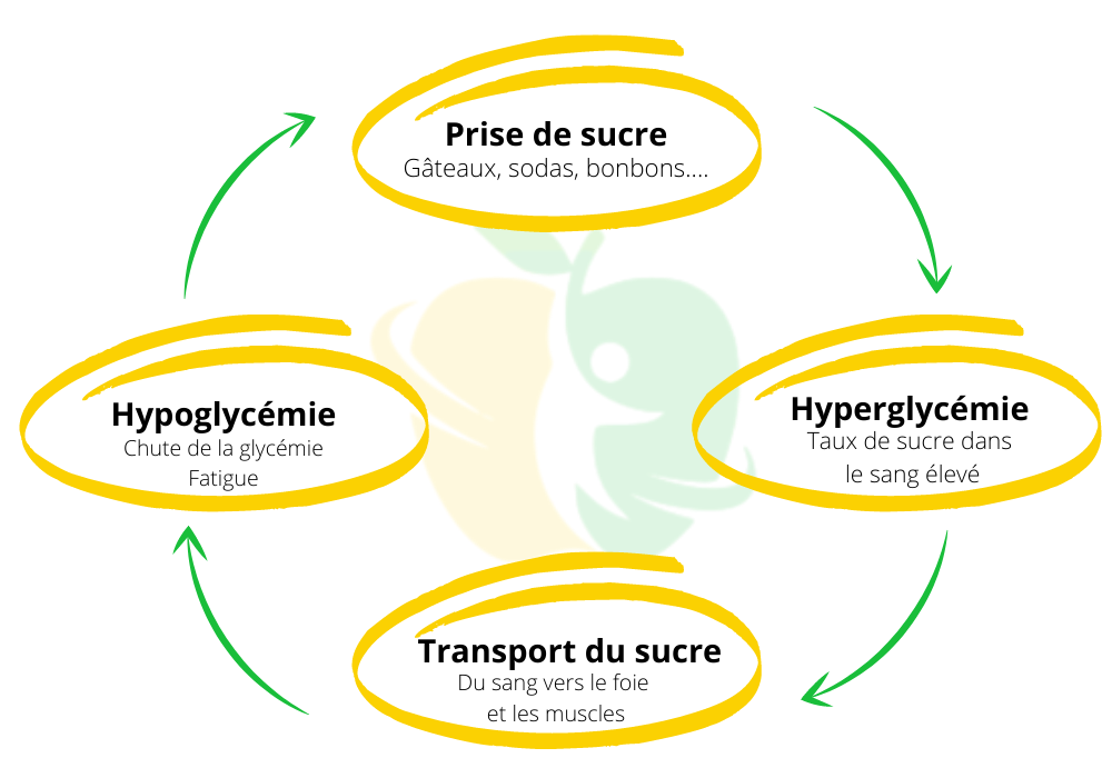 sucre cycle vicieux